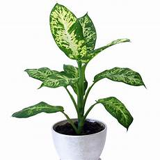 Low Light Apartment Plants 10 Best Houseplants For Low Light Sunset Magazine