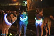 Dog Led Light Halo Lights Led Dog Collars Product Review