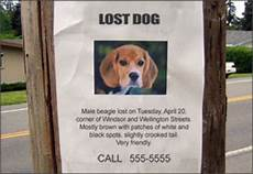 Lost Dog Poster Maker Tips For Advertising A Lost Pet