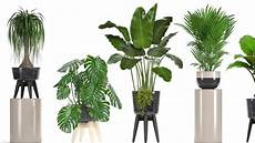 zimmerpflanzen luftreiniger zimmerpflanzen doch kein wundermittel f 252 r sauberere luft