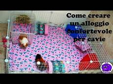 gabbie per cavie peruviane creare recinto o gabbia confortevole per cavie porcellini