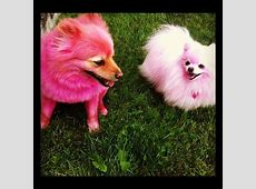 Jeffree star's dogs Diva and Diamond*old pic*   Diva and