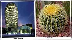 Design By Nature Tanov 10 Nature Inspired Architectural Designs Youtube
