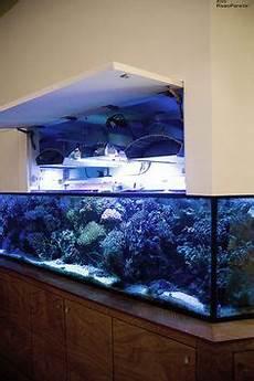 vasche aperte per acquari 108 fantastiche immagini su sistemi raso parete raso