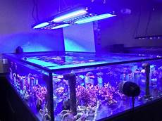T5 Hybrid Reef Light Led T5 Combo Where Are The Good Fixtures