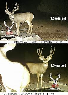 Deer Antler Age Chart The Keys To Antler Growth Age Genetics Nutrition Gohunt