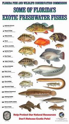 Florida Fish Id Chart The 25 Best Florida Fish Ideas On Pinterest Bbq Fish