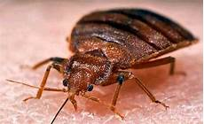 bed bugs questions and answers