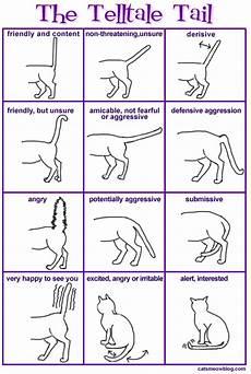 Cat Behavior Chart Cat Body Language Catster