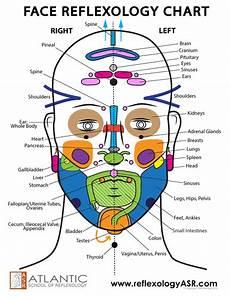 Face Reflexology Chart Face Reflexes Chart Asr Reflexology