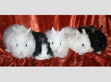 Kaninbilder