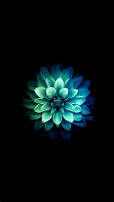 teal flower iphone wallpaper iphone 6 official flower wallpaper search