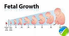 Fetal Growth Chart During Pregnancy How Fetal Length And Weight Can Be Measured With Fetal