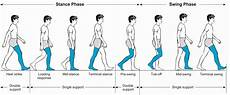 Gait Cycle Phases Of The Normal Gait Cycle Download Scientific Diagram