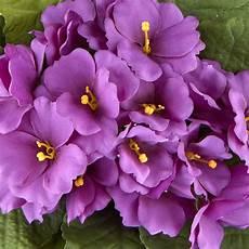African Violet Lighting Artificial Purple Artificial African Violet Bush What S New