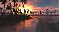fondo horizontales nature landscape tropical sunset palm trees