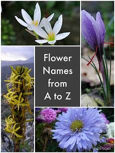 Flower Chart With Names And Pictures List Of Flower Names Hubpages