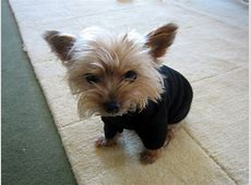 toy yorkie t shirt « Renters In Love
