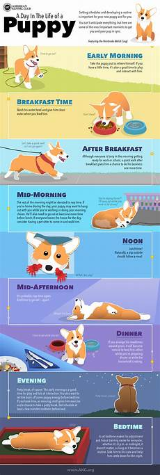 Puppy Exercise Chart Puppy Schedule Daily Routine For New Puppies