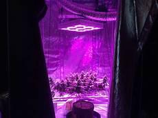Led Lights Or Hps For Growing Hps Vs Led Grow Lights 5 Barriers To Light
