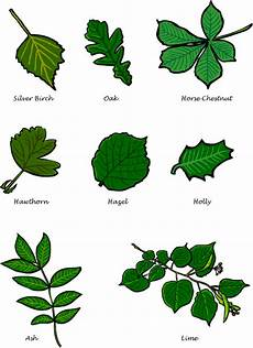 Tree Leaves Chart Bbc Gardening Gardening With Children Leaf Guide
