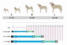 Seresto Dog Collar Size Chart Collar Harness Amp Leash Sizing Information Wolfgang Man