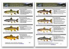 Wisconsin Dnr Organizational Chart Use These Charts To Confidently Id Trout Amp Salmon Species