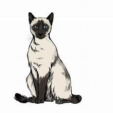 gatto clipart free siamese cat clipart free clip free