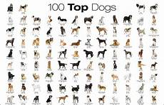 Dog Name Chart The Most Favorite Dog Breeds A To Z With Dog Breeds