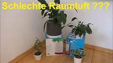 zimmerpflanzen luftreiniger schlechte raumluft luftreinigung mit zimmerpflanzen und
