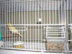 gabbie per canarini da offro gabbie da cove allevamenti canarini posot class