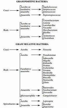 Classification Of Bacteria Chart Oxygen Requirements For Pathogenic Bacteria Microbeonline