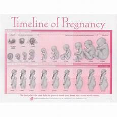 Pregnancy Timeline Chart Timeline Of Pregnancy Chart Birth International