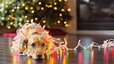 Light Pet Pet Safety During Christmas Southern Living