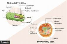 Prokaryotes Vs Eukaryotes What Are The Differences Between Prokaryotes And Eukaryotes
