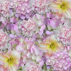 Floral Background Design Free Images Blossom Texture Petal Floral Pink Flora