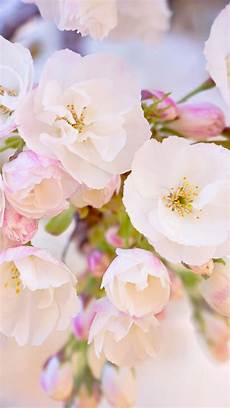 Flower Wallpaper Pictures by Flowers 2018 Wallpapers Wallpaper Cave