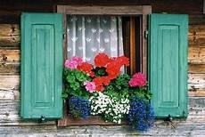 piante da davanzale davanzali fioriti pollicegreen