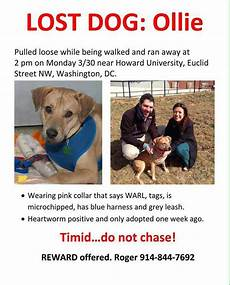 Lost Dog Poster Maker Couple Looking For Lost Dog Threatened With 750 000 Fine