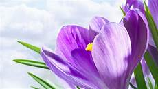 Flower Wallpaper For Laptop by 1080p Flower Hd Wallpapers For Laptop Android Tablets