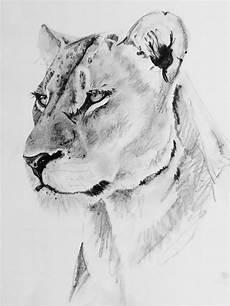 Lion And Lioness Designs Lioness Lioness Female Lion Female Lion