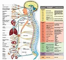 Spinal Pressure Points Chart Spinal Chart At Rs 10 Piece S Medical Chart Id
