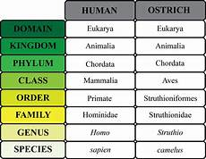 Human Classification Taxonomy Chart Classification Of Humans Google Search Classification