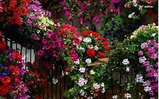 Flower Wallpaper Garden by Garden Screensavers And Wallpaper Wallpapersafari