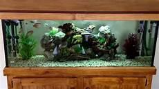 3 Foot Fish Tank Light 4 Foot Community Tropical Fish Tank 4 Month Update Youtube