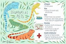 Iguana Food Chart What To Expect From A Pet Iguana