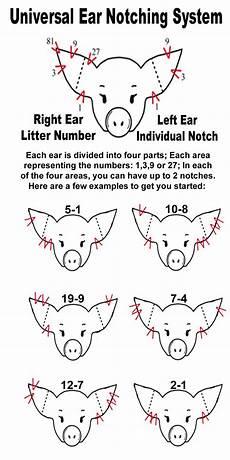 Ear Notch Pig Pig Ear Notching Ear Notch Diagram My Life I Think I