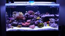 Saltwater Fish Tank Lights Basic 5 Saltwater Types Of Fish Tanks Saltwater Aquariums