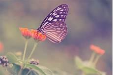 Mariposas Y Flores Mariposa En Una Flor Foto Gratis