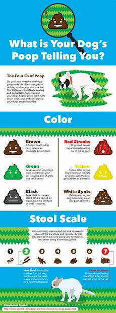 Dog Stool Colour Chart What Should My Dog S Look Like Petmd